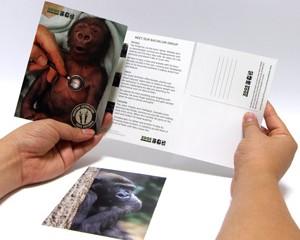 Gorilla Appeal, Zoos Victoria